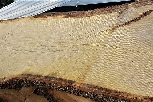 Okantad ek planka (lufttorkad 1 år)