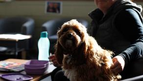 "(Australia) W. Tasmania school ""therapy dog"" to ""regulate emotions, improve behaviour"""
