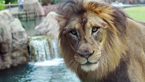 """Cincinnati: Zoo holds """"Quiet Day"""" for """"those with sensory sensibilities"""""""