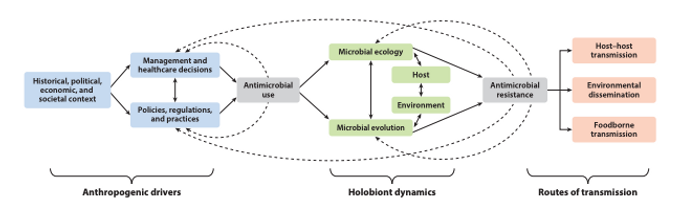 Beyond Antimicrobial Use: A Framework for Prioritizing Antimicrobial Resistance Interventions