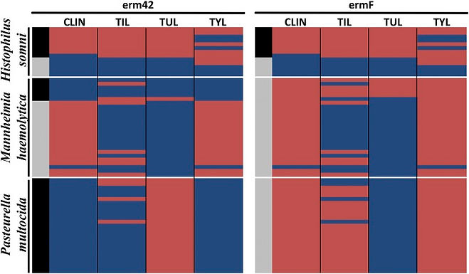 Whole-Genome Sequencing and Concordance Between Antimicrobial Susceptibility Genotypes and Phenotypes of Bacterial Isolates Associated with Bovine Respiratory Disease.
