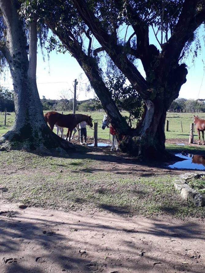 Eventos apoiados/patrocinados equinos empóriopet® - Junho/2018