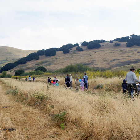 Newell Open Space Update