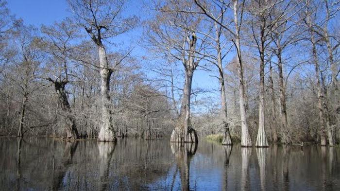 spring bayou.jpg