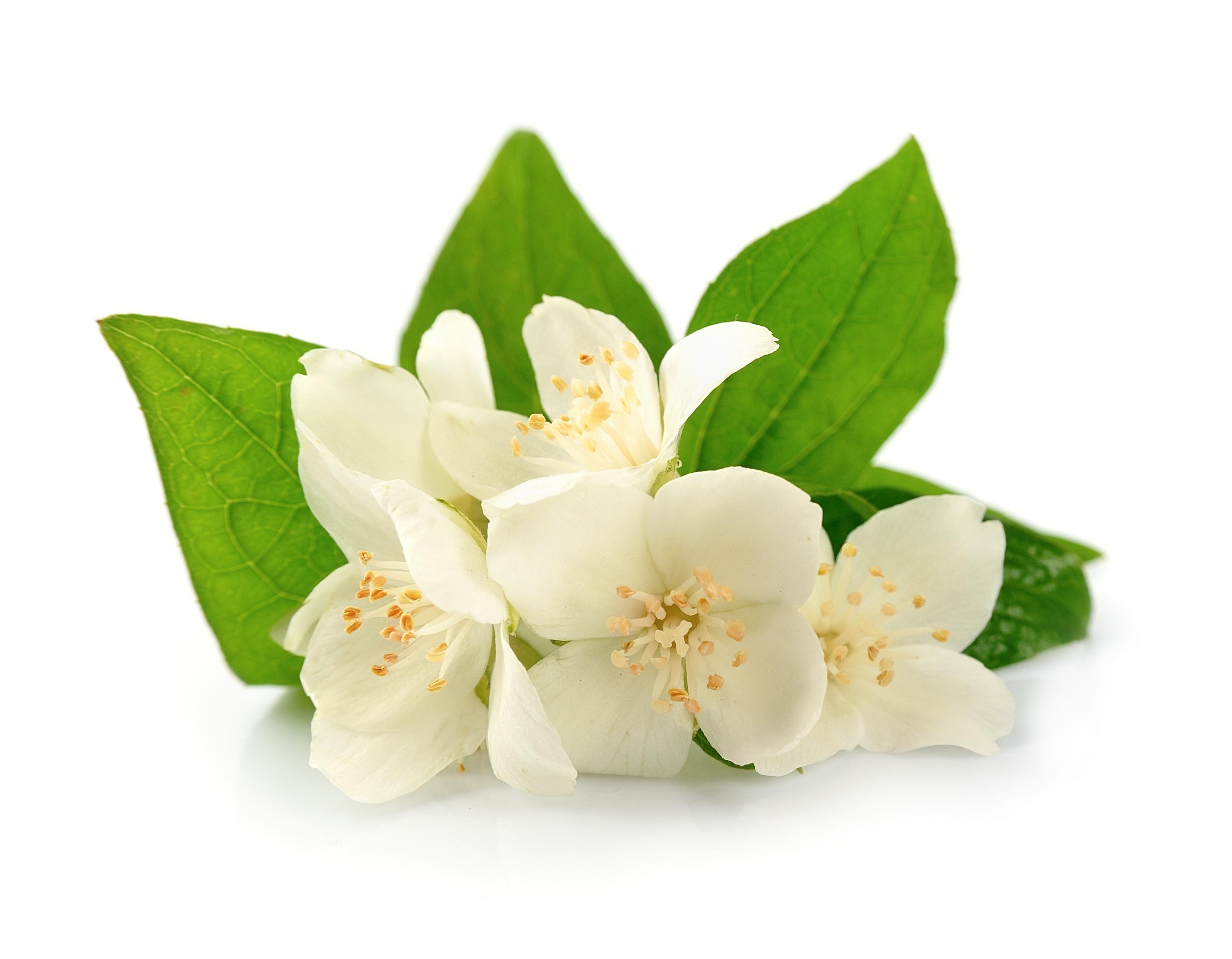 Massage au parfum de Jasmin