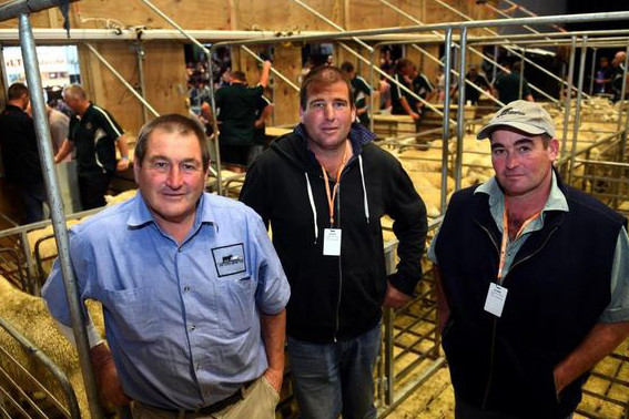 Stars of Shearing Championships