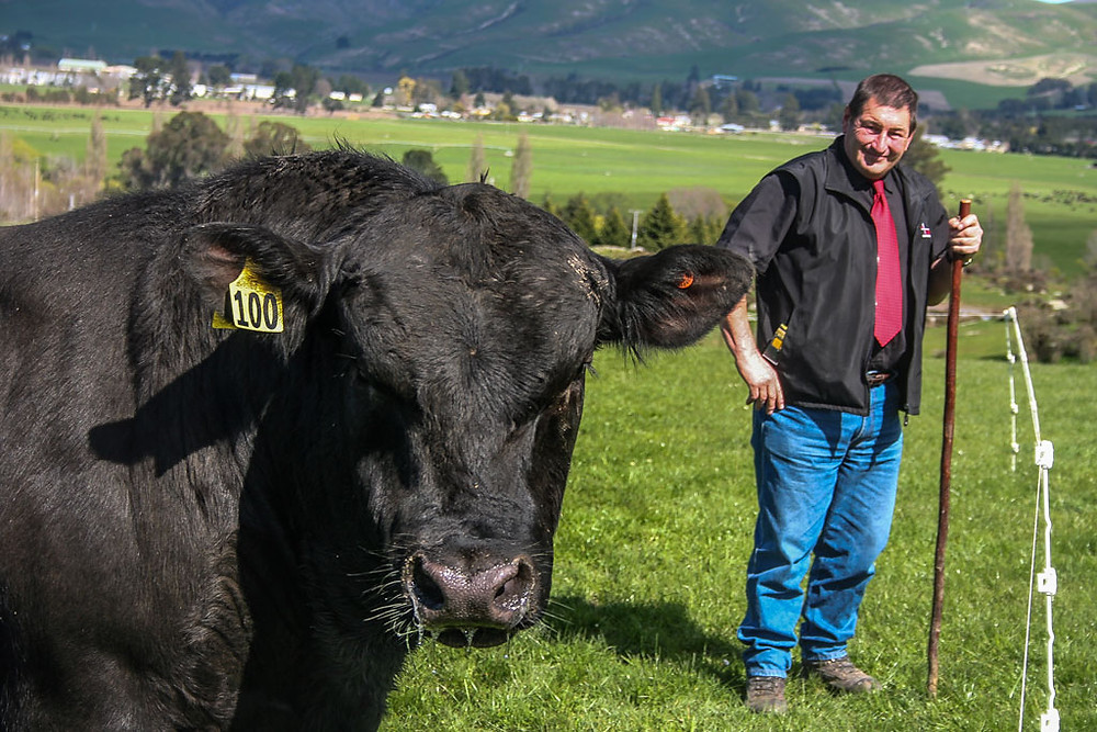 Trevor Peters and one of his angus bulls, Otago, New Zealand.