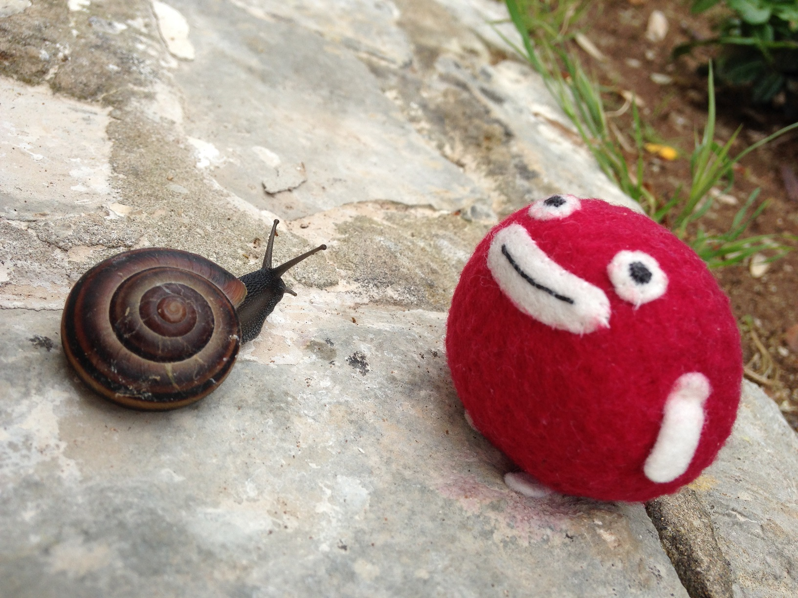 Hello! Mr Snail