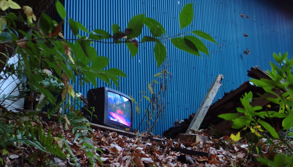 WRONG TV