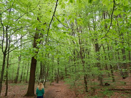 Zabierzow forest