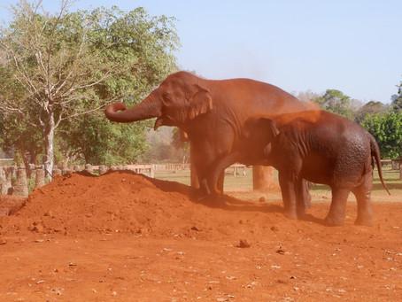 Elephant life