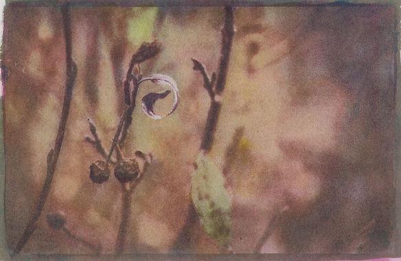10.Blueberries_PBillin-Frye.jpg