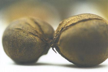 Hickory Nuts.jpg