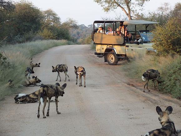Rhino-Post-Safari-Lodge-Safari-Wild-Dog.jpg