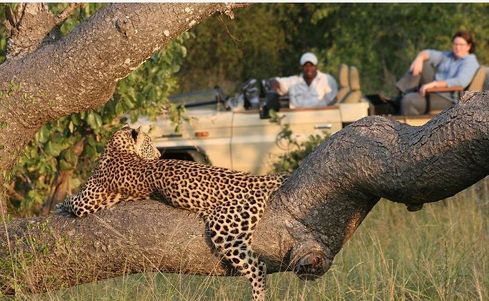 leopard of manyeleti.jpg