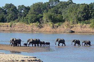 1200px-Luangwa_River_crossing.jpg