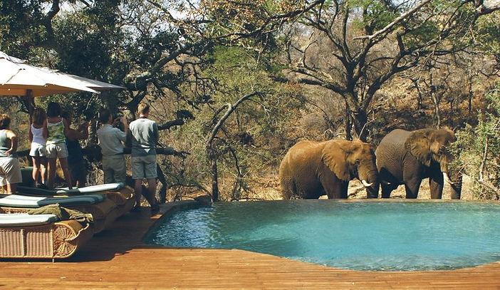 tuningi safari.jpeg