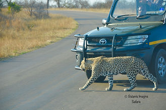 leopard of the H3.jpg