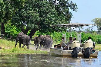 chobe safari.jpg