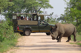 kruger-park-safaris-game-drive-785x519.j