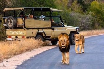 RHINO POST LIONS.jpg