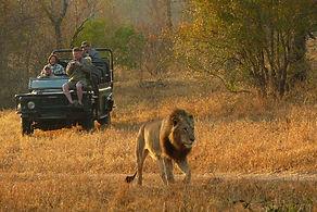 umkumbe-safari-lodge-safari.jpg