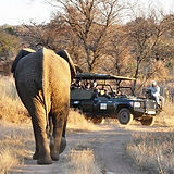 Dinokeng-Game-Reserve_453_300_90auto_s.j