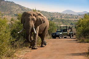 Bakubung Bush Lodge_Wildlife_Game Drives