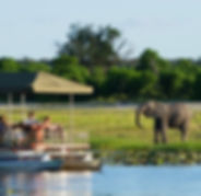 chobe-river-cruise-elephant-sighting-590
