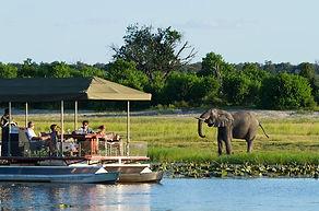 chobe-river-cruise-elephant-sighting-590x390.jpg