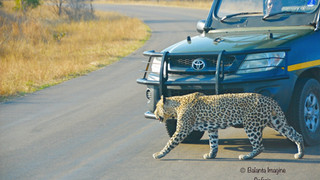 leopard%20of%20the%20H3_edited.jpg