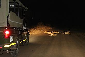 night drive 1.jpg