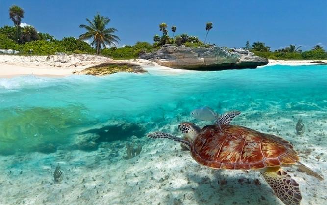 zanzibar turtle.jpg