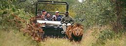 safari vehciel.jpg