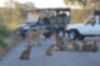 lion road block.jpg