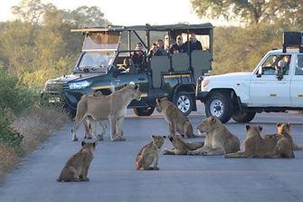 lion road block.jpg