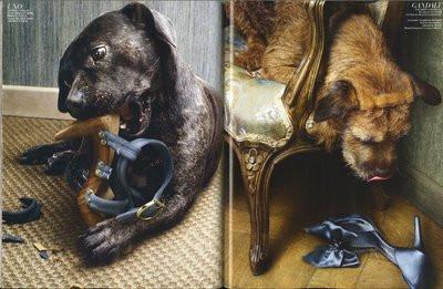 Собака грызет обувь, мебель, стены?