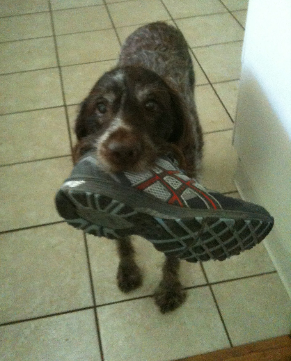 Как отучить собаку грызть обувь, мебель, стены ?