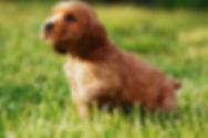 Дрессировка собак