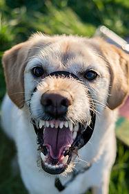 Снижение агрессии у собак