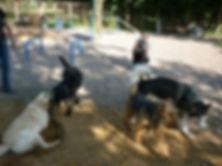 Собачья площадка для дрессировки собак