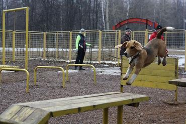 Воспитание щенка и коррекция поведения собаки