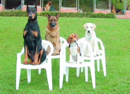 Сидеть в группе. Соревнования по Обидиенс (что означает «послушание»