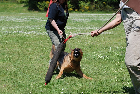 Хендлер с собакой на тренировке Шуцхунд (Schutzhund)