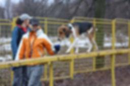 Дрессировка собак Москва Викинг
