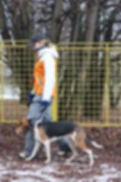 Дрессировка собак в Москве, эстонская гончая на дрессировочной площадке