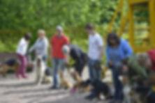 Курсы дрессировки собак на групповом занятии с кинологом