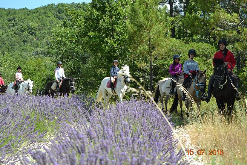 29/ Domaine Equestre du Moulin