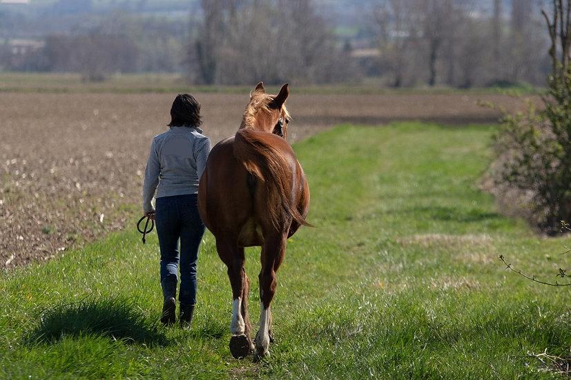 Praticienne Reïki pour cheval et humain