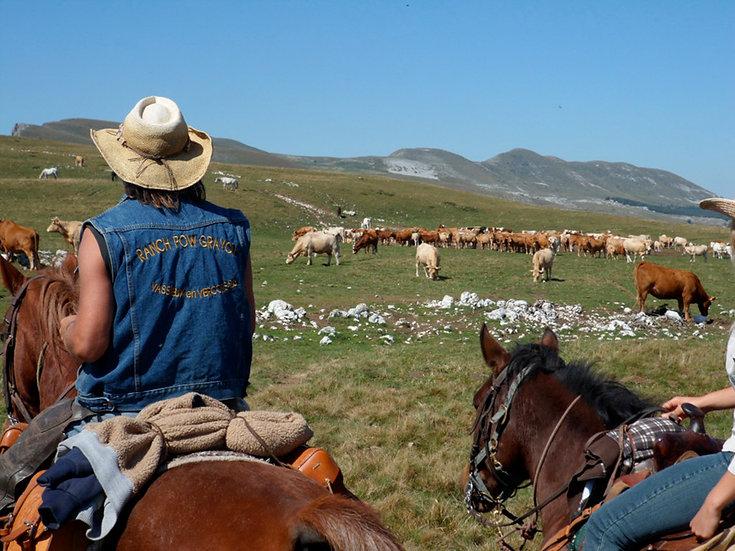 8/ Ranch Pow Grayon